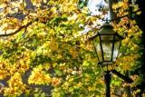 Kraków. Jesień zawitała do miasta. Koniec z używaniem dmuchaw do liści