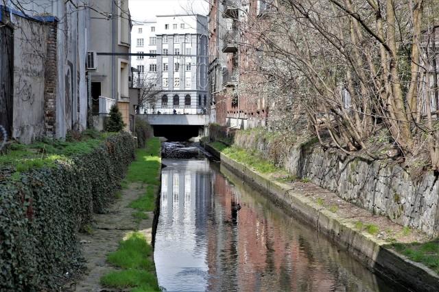 Urząd Miasta w Katowicach pochwalił się czyszczeniem Rawy. Na niektórych zdjęciach widać jednak, ile jeszcze wysiłku trzeba włożyć, aby otoczenie rzeki zostało uporządkowane.Zobacz kolejne zdjęcia. Przesuwaj zdjęcia w prawo - naciśnij strzałkę lub przycisk NASTĘPNE