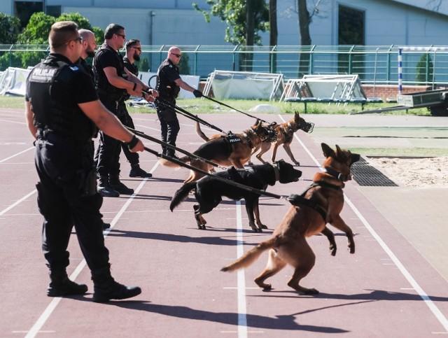 Policyjne psy i konie, które zakończa pracę w służbach mundurowych będą miały zagwarantowaną dożywotnią opiekę. Rząd przyjął projekt ustawy regulującej status tych zwierząt.