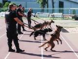 Dożywotnia opieka dla zwierząt służących w służbach mundurowych. Przyjęto projekt ustawy