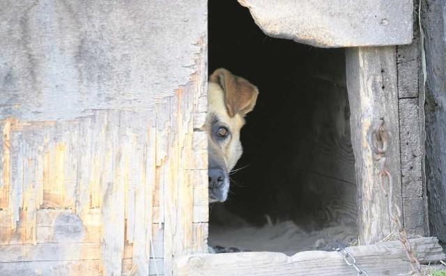 Światowy Dzień Zwierząt ma przypominać, że zwierzę to nie rzecz, a istota żywa i ma swoje prawa