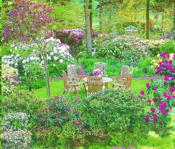 Różaneczniki pięknie kwitną, jeśli mają  odpowiednie podłoże i stanowisko
