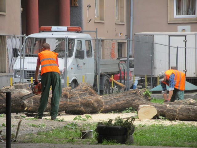 wycinka drzew przy ul. Szewskiej
