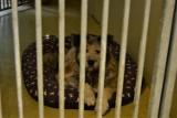 Możesz pomóc zwierzakom w gdyńskim Ciapkowie. Trwa internetowa zbiórka na pomoc psim i kocim potrzebującym