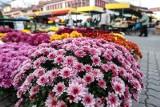 Rozpoczyna się sezon na chryzantemy. Wybieramy kwiaty w odcieniach różu, czerwieni oraz fioletu
