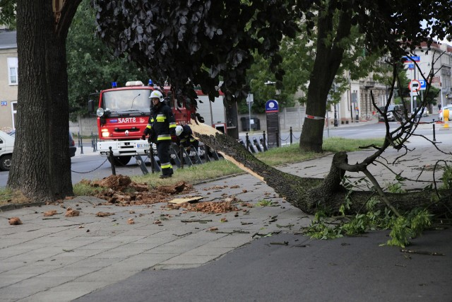 Silny wiatr w Łodzi uszkodził drzewa