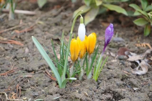 Wiosny w pogodzie na razie nie widać, ale to nie znaczy, że jej nie ma. Jak naukowcy rozpoznają, że się już zaczęła i co to jest wiosna fenologiczna, wyjaśnia ekspertka. Przeczytajcie poniżej.