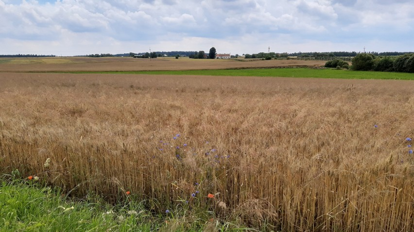 Podstawę ustroju rolnego w Polsce stanowi gospodarstwo...