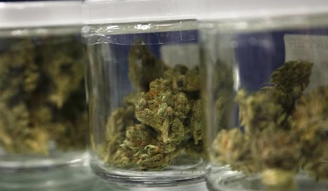 Lecznicza marihuana w Polsce. Będzie dostępna w aptece! Jest producent, który zgłosił ją do rejestracji