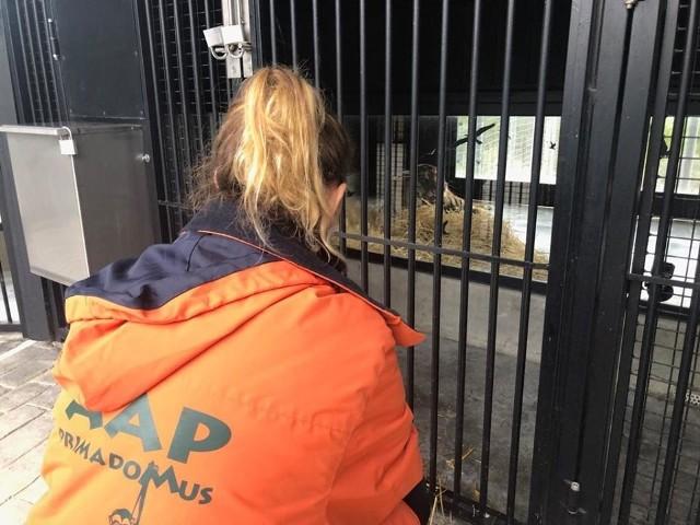 -  Po długiej podróży mogą teraz odpocząć w naszych pięknych, przestronnych wybiegach - informuje stowarzyszenie Adwokatów Zwierząt. W ich ośrodku w Hiszpanii zwierzęta mają odnaleźć spokój. Przebyły długą drogę.