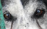 Najwyższy wyrok w historii w Polsce za znęcanie się nad zwierzętami. Za zabicie psa sąd skazał sprawcę na 4 i pół roku więzienia