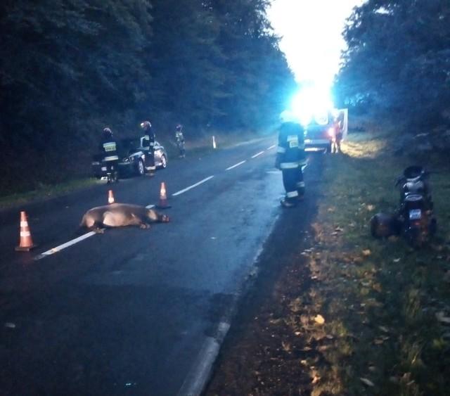 Do tego niebezpiecznego zdarzenia doszło w poniedziałek rano na drodze krajowej nr 28, w lesie pomiędzy Dybawką a Prałkowcami pod Przemyślem.- Kierujący oplem nie zauważył w porę przechodzącego przez drogę dzika i potracił go. Jadący za nim na motorze mężczyzna również został zaskoczony tą sytuacją i najechał na leżącego na jezdni dzika, wskutek czego upadł doznając obrażeń ciała - powiedział Marek Janowski, rzecznik prasowy Wojewódzkiej Stacji Pogotowia Ratunkowego w Przemyślu.Na miejsce zadysponowano strażaków z Przemyśla, OSP Krasiczyn, pogotowie ratunkowe i policję. Kierujący jednośladem, 53-latek z pow. przemyskiego z urazem głowy został przewieziony na dalsze badania do szpitala. Locha dzika nie przeżyła.Aktualizacja, godz. 10.30Kierujący oplem, 29-letni mieszkaniec pow. przemyskiego wydmuchał 0,8 promila alkoholu. Za jazdę pod wpływem alkoholu odpowie przed sądem.Zobacz też: Śmiertelny wypadek w Srocku koło Piotrkowa. Citroen zderzył się z dzikiem