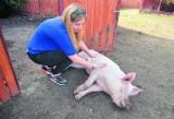 Do schroniska dla zwierząt trafiają już nie tylko psy i koty, ale również świnie, konie, kozy...