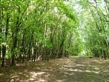 """Miasto Łódź sprzeda """"Zieloną Ostoję"""" deweloperom? Jest stanowisko komisji ochrony środowiska"""