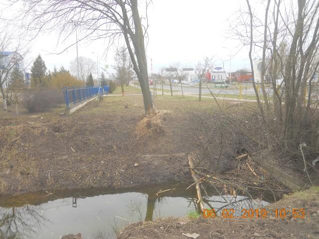Bobry w Białymstoku mogą przysporzyć kłopotów.