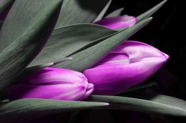 DZIEŃ KOBIET. Kiedy jest dzień kobiet? 8 marca 2021 obchodzimy Międzynarodowy Dzień Kobiet! Najlepsze życzenia do wysłania sms na dzień kobiet. Jakie życzenia złożyć z tej okazji? Poniżej przedstawiamy wierszyki na dzień kobiet!