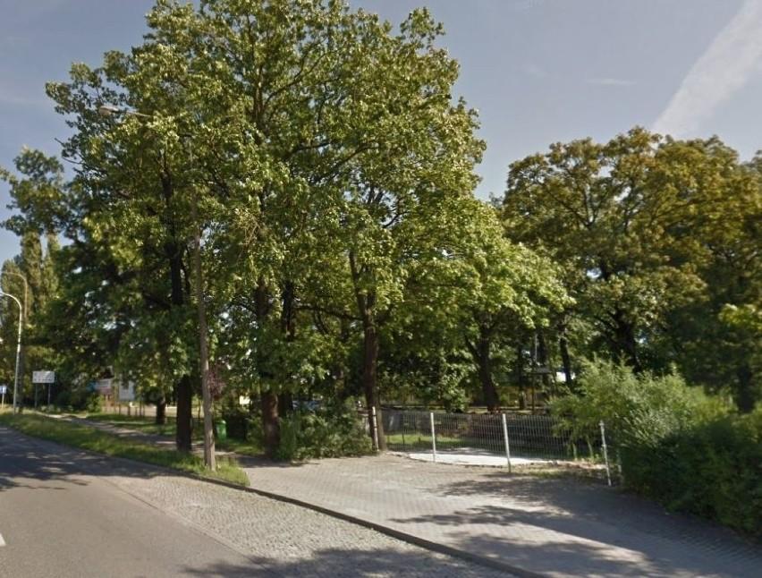 Z trasą rowerową wzdłuż ulic Sosnkowskiego i Horoszkiewicza w Opolu koliduje około 40 drzew