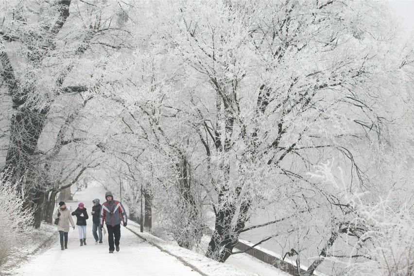 W tym roku nie będzie już zimy....