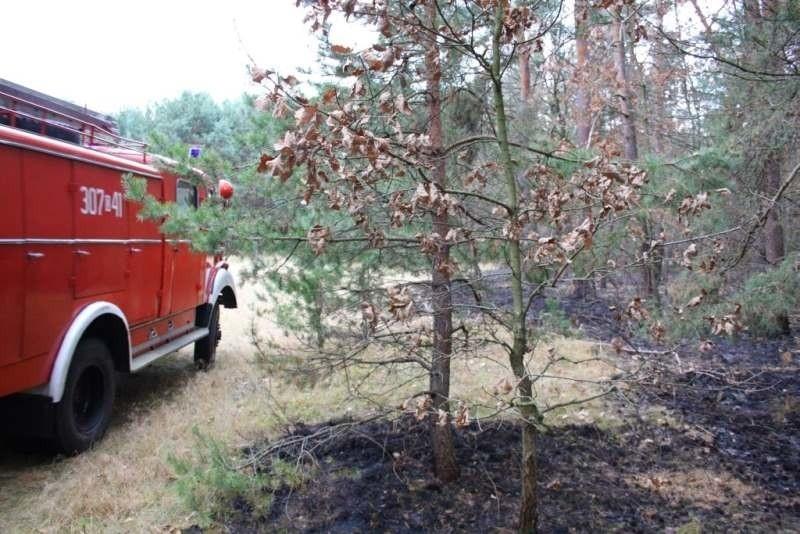 Do pożarów dochodziło w rejonie miejscowości Antoniów,...