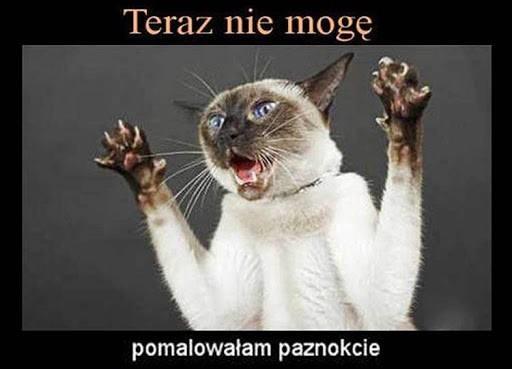 Najlepsze memy i obrazki o kotach. Śmieszne memy z kotami w...