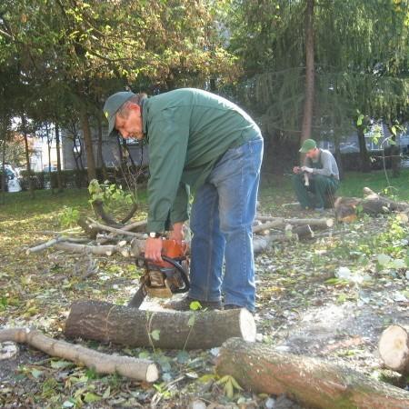 W środę pilarze ścięli kilka drzew w północnej części skweru w centrum Żar.