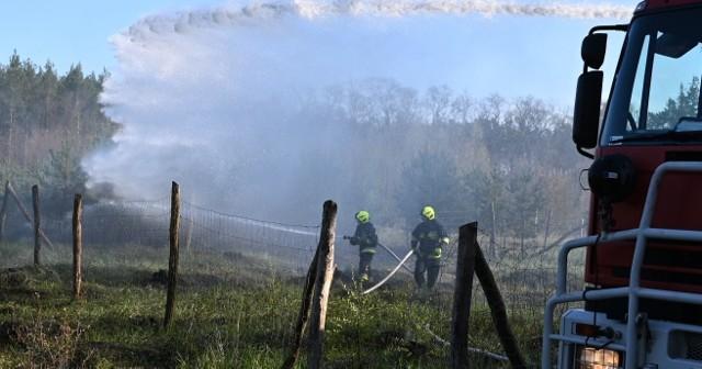 Palił się sosnowy młodnik na terenie Nadleśnictwa Rzepin.