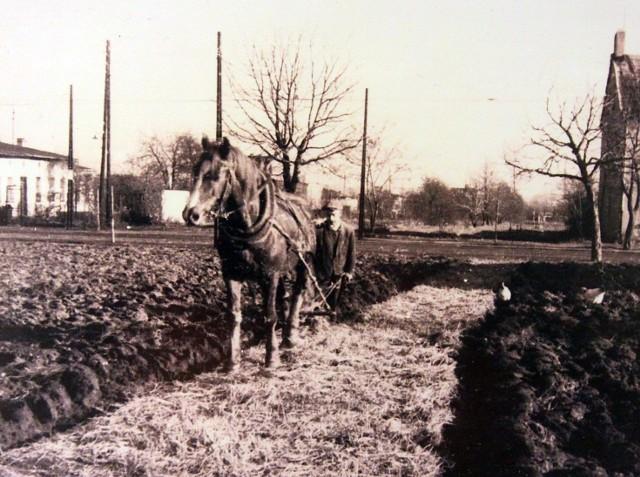 Retkiński rolnik orze pole. Okolice ul. Retkińskiej