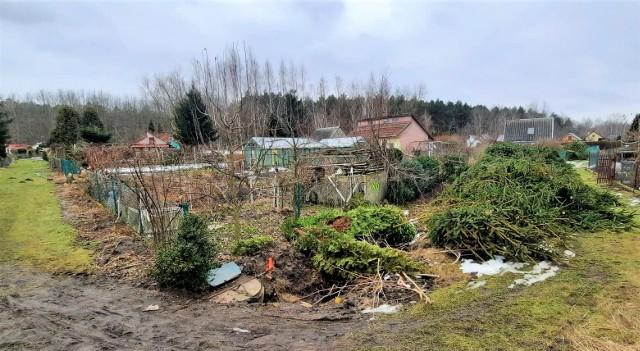 Wycięte drzewa na terenie Rodzinnych Ogrodów Działkowych Kamionka w Tarnobrzegu