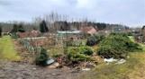 Na działkach, które przetnie obwodnica Tarnobrzega, ścięto drzewa. Rzeczoznawca rozpoczyna pracę (ZDJĘCIA)
