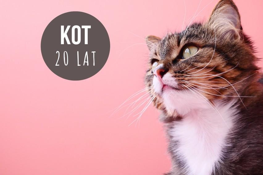 Koty niewychodzące żyją znacznie dłużej niż te uliczne. W...