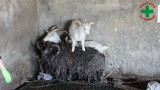 Zwierzęta zamknięte w piwnicy pod Nakłem. Zapadł wyrok w sprawie Tomasza G. [drastyczne zdjęcia]
