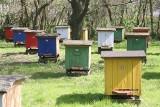 Uwaga na nowy problem w ulach! Pszczoły zagrożone?
