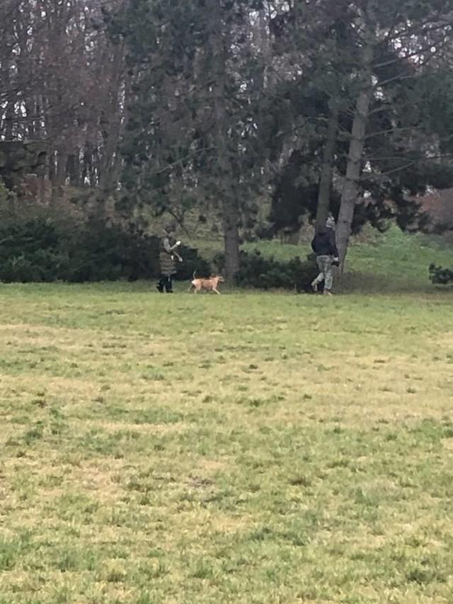 Kobieta została zaatakowana na Cytadeli 13 grudnia. Raper i trener personalny miał uderzyć w twarz kobietę, która stanęła w obronie swojego psa.