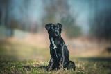 Pieski do adopcji ze schroniska w Chorzowie na fotografiach Daniela Dębca ZDJĘCIA