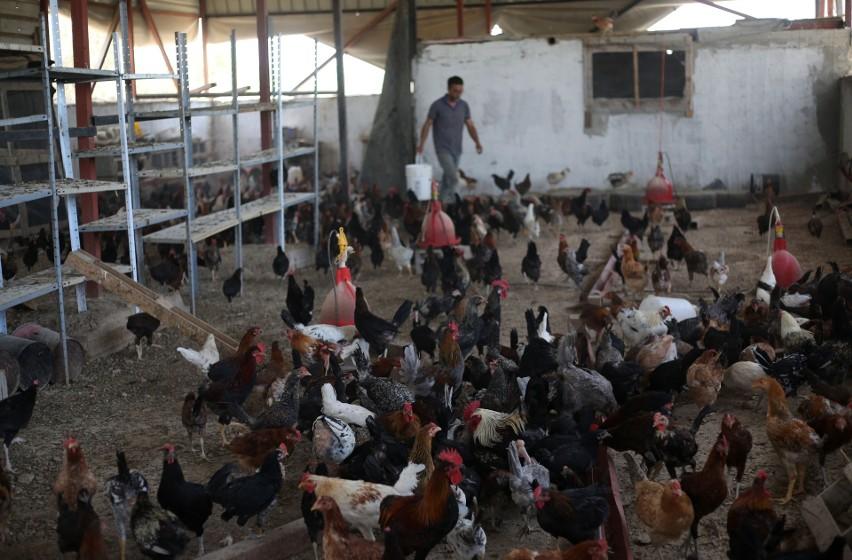 Chiny: Naukowcy potwierdzili pierwsze na świecie zakażenie ptasią grypą H10N3 u człowieka