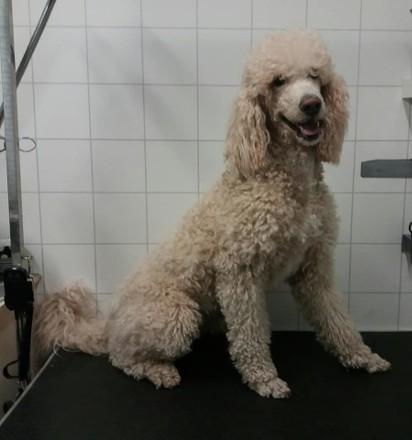 Psia Fryzjerka Z Gorzowa Potrafi Robić Cuda Zobacz Psy Przed I Po