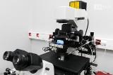 Lokalne programy in vitro. Szczecin i Nowogard jako pierwsze sięgną po dodatkowe środki. Otrzymają ponad 170 tys. zł wsparcia