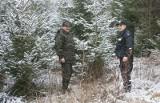 Choinka za 5 tys. zł. Tyle kosztuje kradzież drzewka