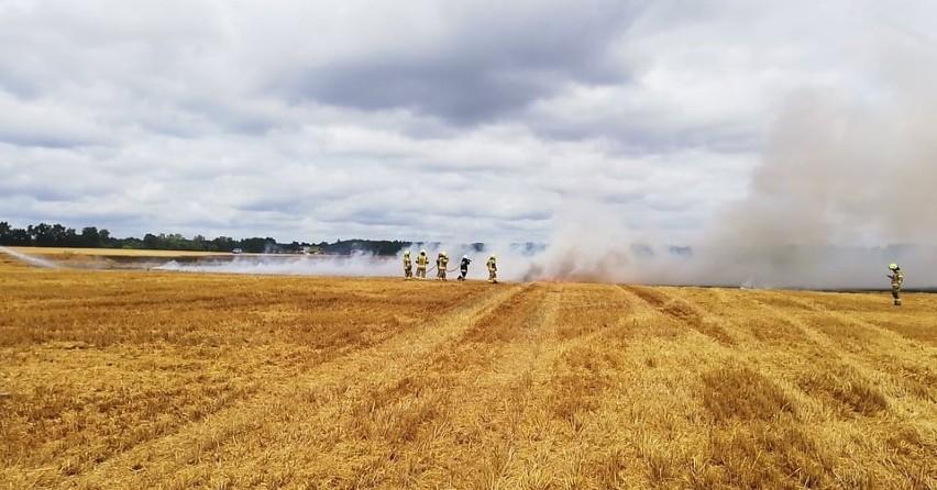 Wielki pożar pola zboża pod Słupskiem