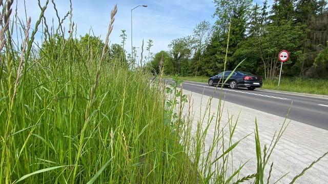 Gorzów ogranicza koszenie trawników. Z powodu suszy trawy będą przycinane z mniejszą częstotliwością.
