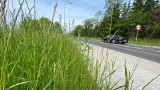 Jak na łące czy jak w buszu? Koszenie traw w Gorzowie dzieli mieszkańców