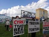 """Cyrk przyjechał do Wrocławia, a tu protest. """"To piekło dla zwierząt'"""