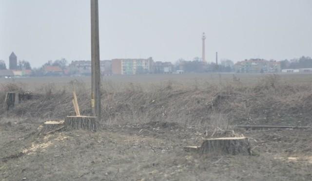 Ścięte drzewa przy DK 11 na odcinku Kluczbork-Byczyna