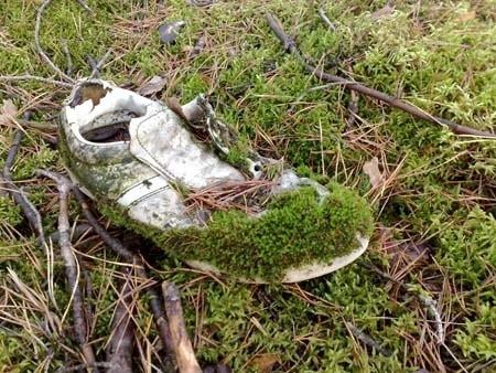 Mchy są organizmami pionierskimi. Potrafią kolonizowac niegościnne siedliska. Nawet pozostawione w lesie obuwie.