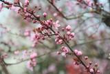 Dziś pierwszy dzień astronomicznej wiosny! W Słubicach drzewa puściły pąki, jest naprawdę pięknie