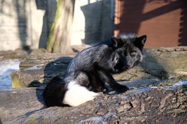 Stare Zoo przeciwko przemocy wobec natury