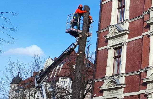 W środę, 30 listopada między godziną 12.00 a 13.00, na ulicy Bankowej miała miejsce ścinka drzewa. W związku z tym kierowcy oraz piesi zmierzający w kierunku Alei Niepodległości przez kilkadziesiąt minut musieli liczyć się z utrudnieniami. Z racji miejsca, akcja ścinania nie odbywała się w trybie standardowym, począwszy od rzazu podcinającego, tylko etapowo od góry. Poszczególne fragmenty drzewa, przy zachowaniu bezpieczeństwa były sprowadzane na dół.Zobacz również: Zawody drwali Bobrowa 2017. Pojedynek finałowy Mateusz Sitarik - Didier PolanowskiPOLECAMY RÓWNIEŻ PAŃSTWA UWADZE:Ziemia zatrzęsła się w Zielonej Górze. Wiemy, gdzie było epicentrum