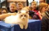 Święto kotów w Sukcesji -  tłumy łodzian zachwycają się kocimi pięknościami [zjęcia]