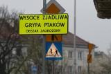 Ptasia grypa pod Wrocławiem. Część miasta zagrożona