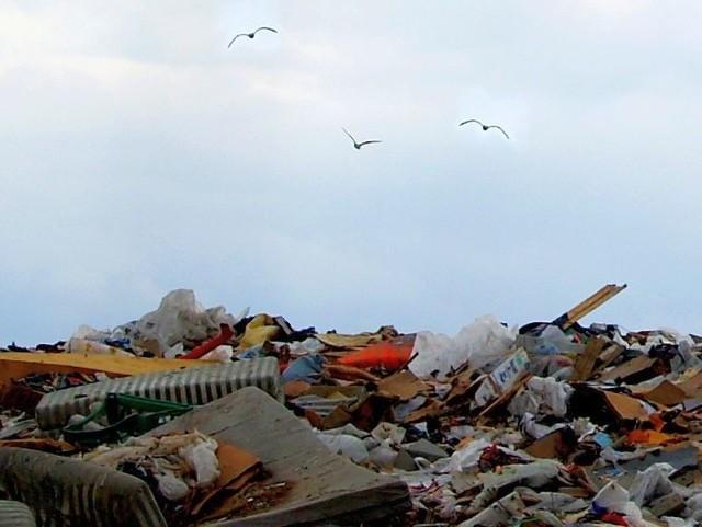 Dziś o śmieciach dyskutuje cała Polska, bo rząd wprowadza tzw. ustawę śmieciową, która nakłada na samorządy obowiązek gospodarowania odpadami.